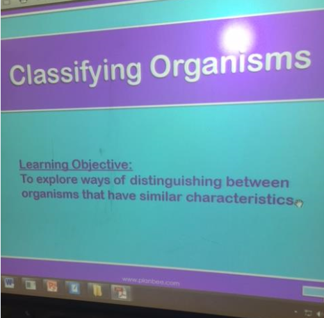 Classifying Organisms Year Five