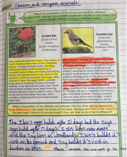 Observing and Comparing Animals Year Five