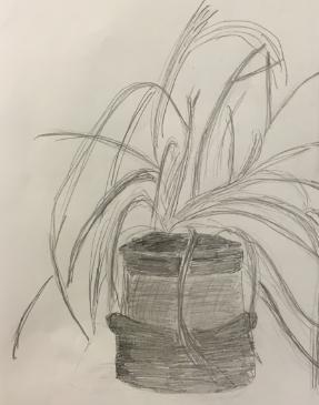 Year Six Sketching
