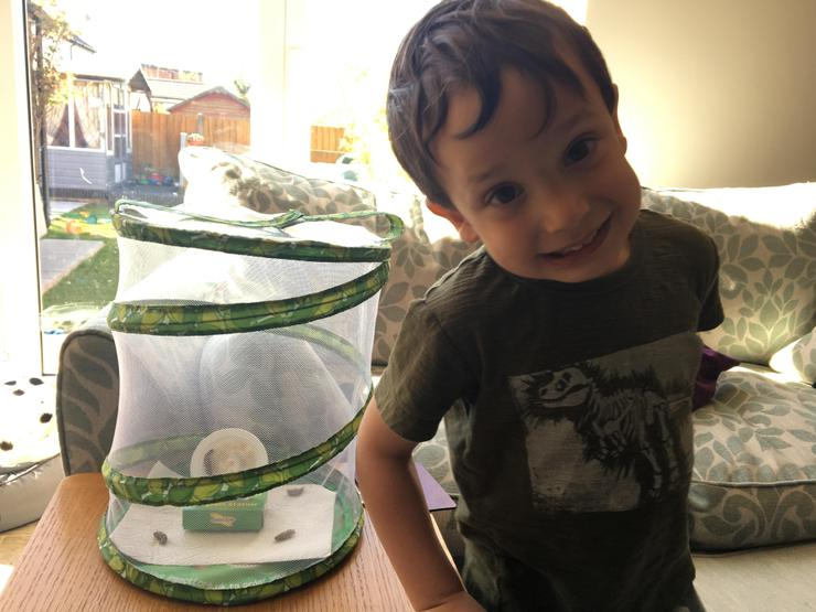 Noah is looking after caterpillars at home