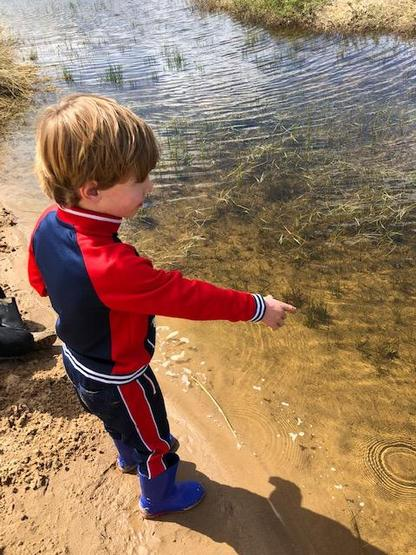 Looking for tadpoles