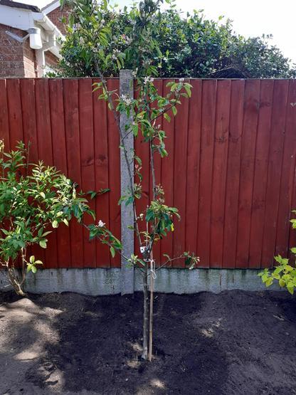 Eva's family growing their own vegetables
