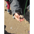 Masked crab - look at the length of those claws!