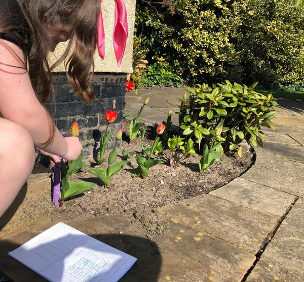 Outdoor science - who's bulb grows the best?