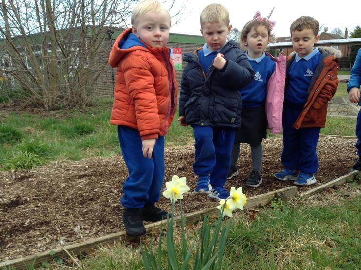 We spotted different coloured daffodils