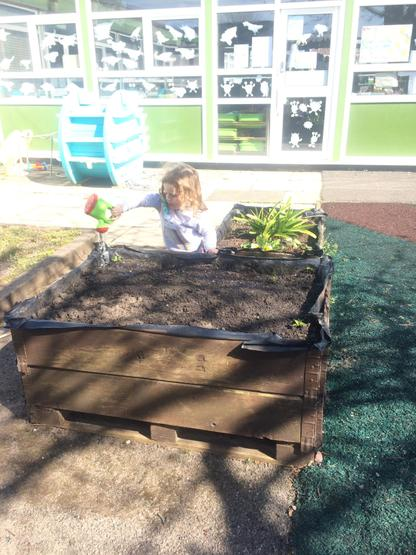 Look Mr Anderson! Watering our potato plants!