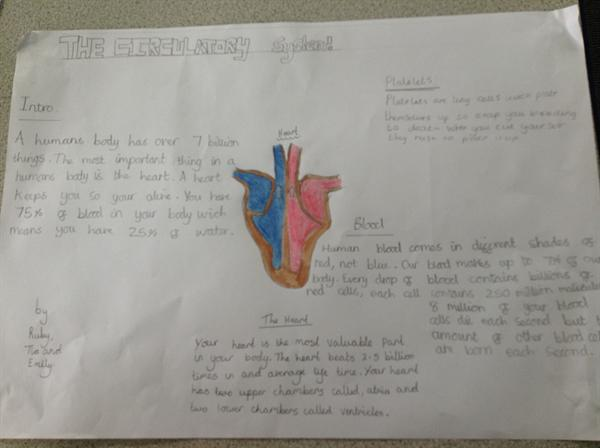Science Report - The Heart and how it works