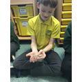 Gecko with sticky feet