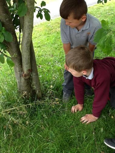 Exploring in the school grounds