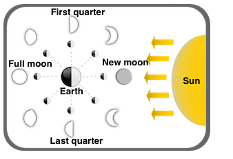 Phases of the Moon labels