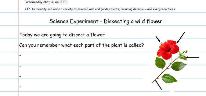 Can you remember the parts of a flower