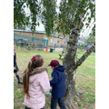 Looking for habitats around the school grounds.