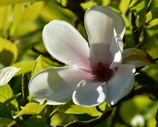 Flower in my garden