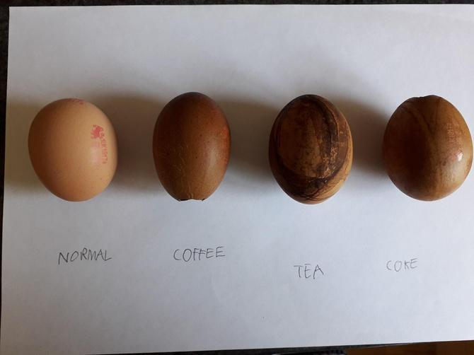 Charlie's egg experiment results!