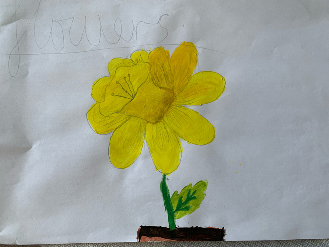 Eva M's beautiful daffodil!