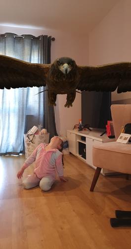 Flying overhead - a beautiful Eagle!