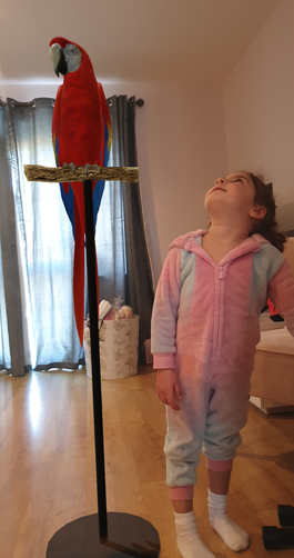 The Macaw was a little tall for Angelina.