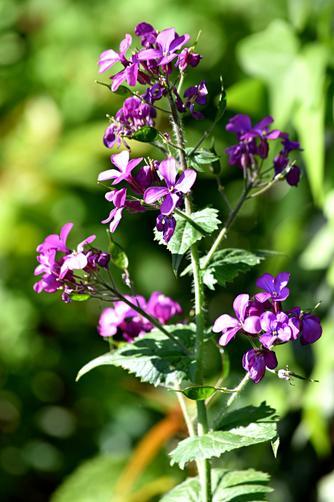 Another flower in my garden