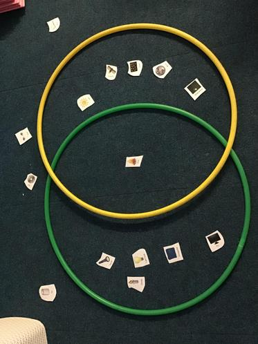 Class 3's Venn Diagram