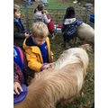 A mummy goat is called a 'Nanny Goat'