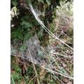 Oh Oh! A frosty web...