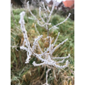 It's very frosty!