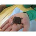 Does dark chocolate melt the quickest?