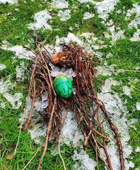 S found a dragon nest in her garden!