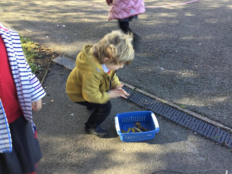 Collecting different coloured leaves.