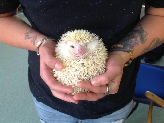 A very happy Gilbert the hedgehog