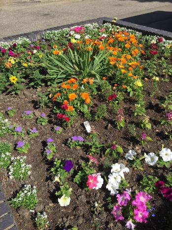 Our School Flowers are looking great!