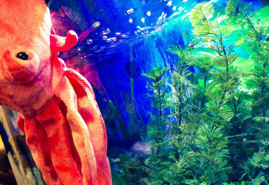 An octopus in the fishtank!