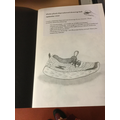 Our termly shoe sketch