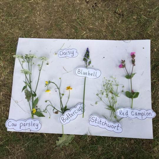 The flowers we found and identified