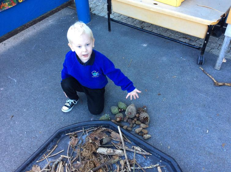 Look at all the pine cones we found!