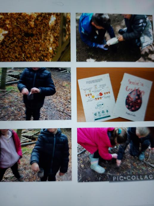 Planting seeds in the forest using a recyclable card!
