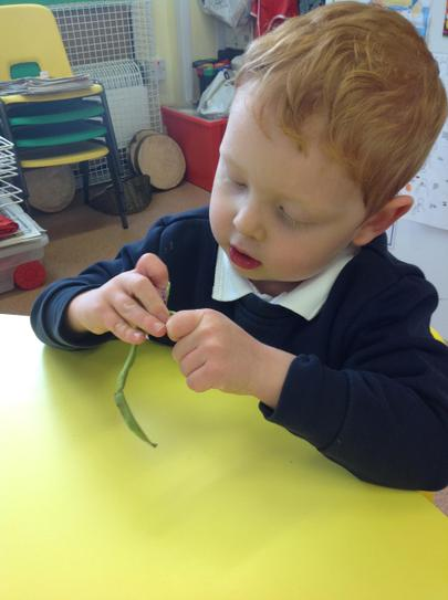 we have been looking at runner beans