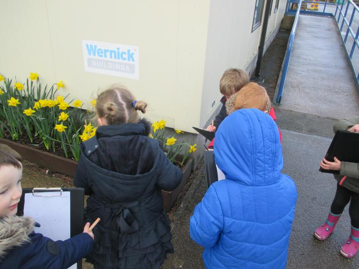 Using a tally to count the daffodils.