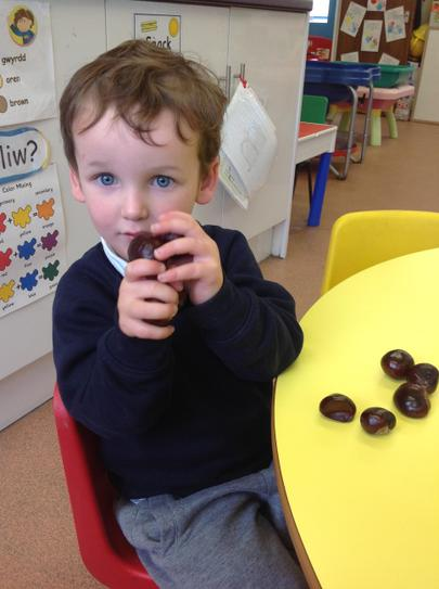 We have been looking at conkers.......