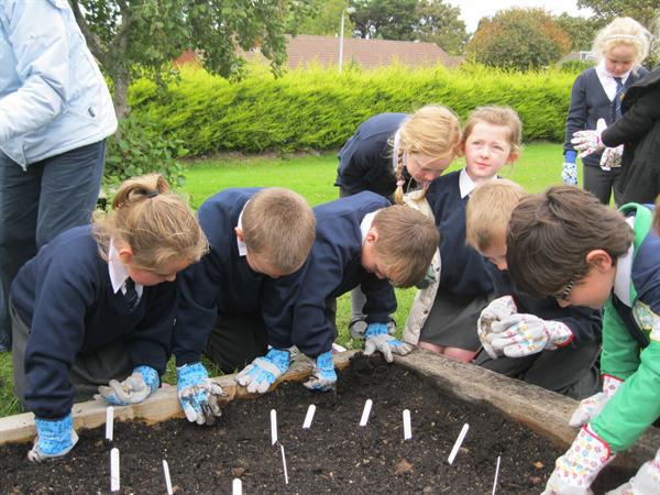 We patted the soil once we had planted the bulb.