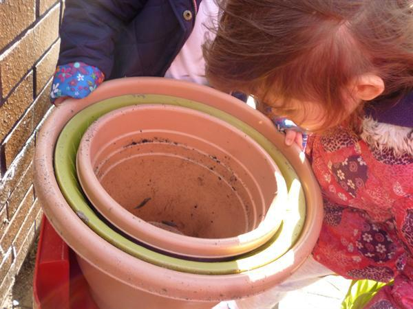 We looked for minibeasts in the pots.