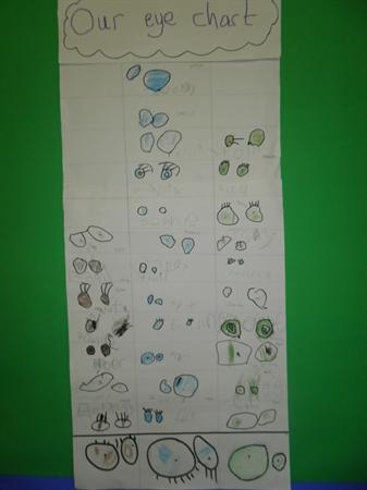 Our eye chart....what colour eyes do you have?