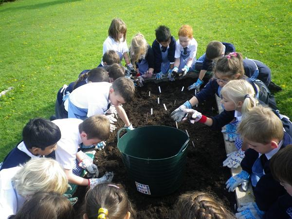 We have each planted at least one bulb.