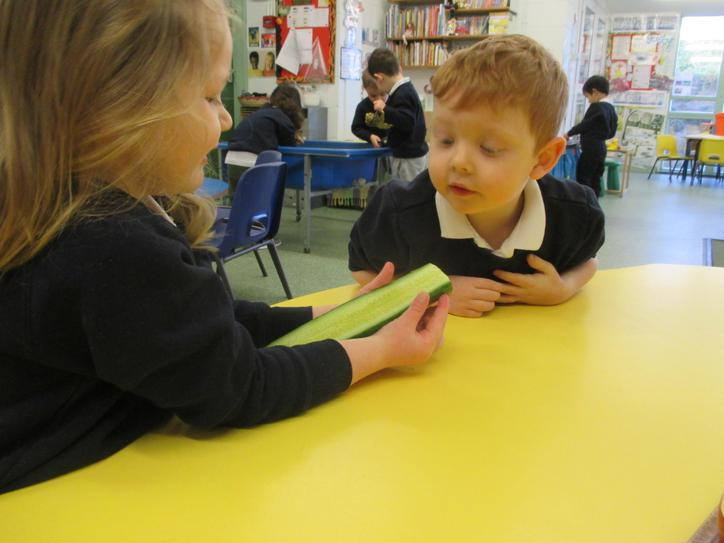 'I can see the seeds.'  Looking at a cucumber.