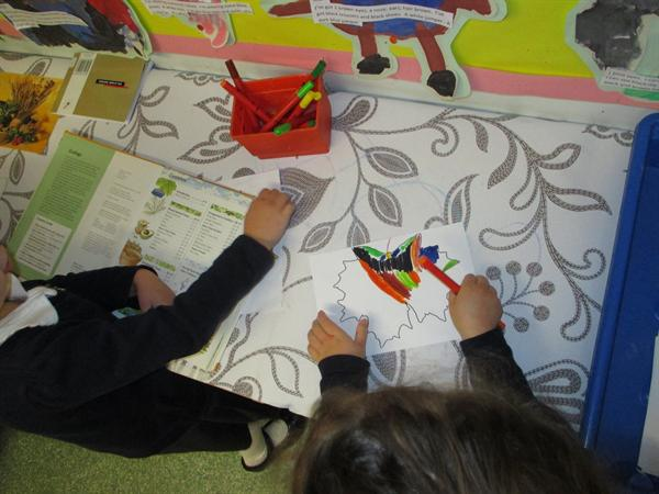 Looking for information. Colouring autumn leaves.