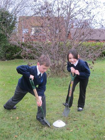 Our School Council has been given 25 trees