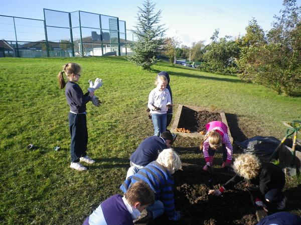 Planting bulbs for the Spring