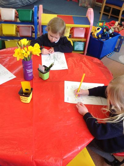colouring daffodils