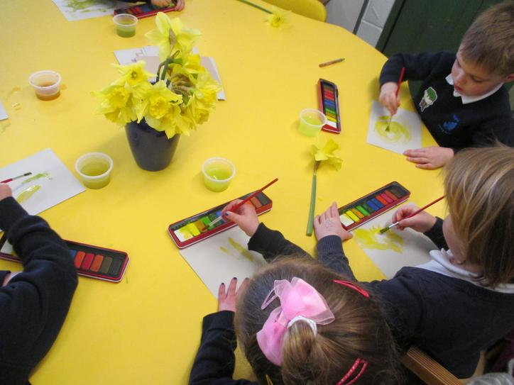 Using watercolours to paint pictures of daffodils.