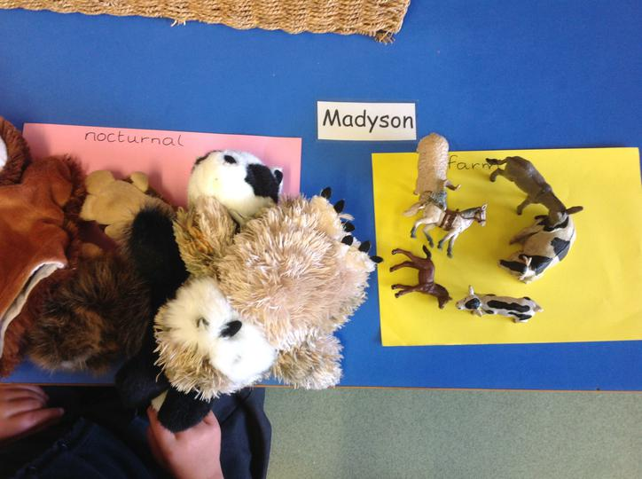 Sorting Nocturnal and Non Nocturnal Animals